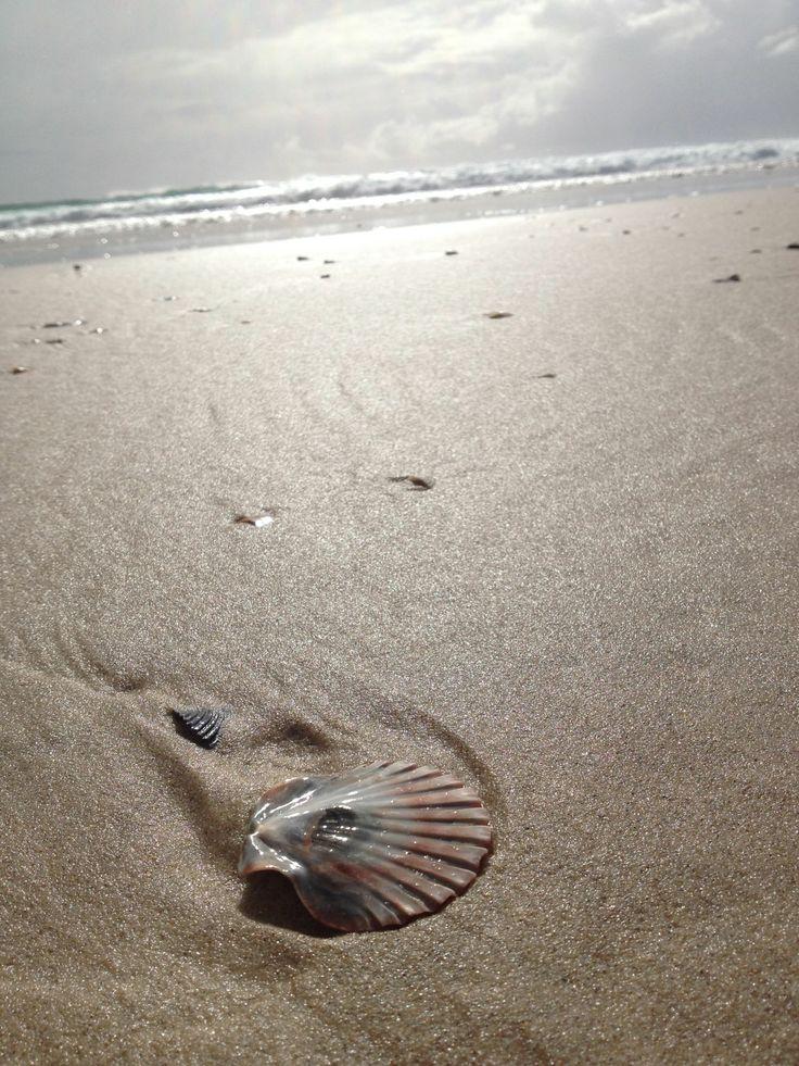 Shell, Gold Coast