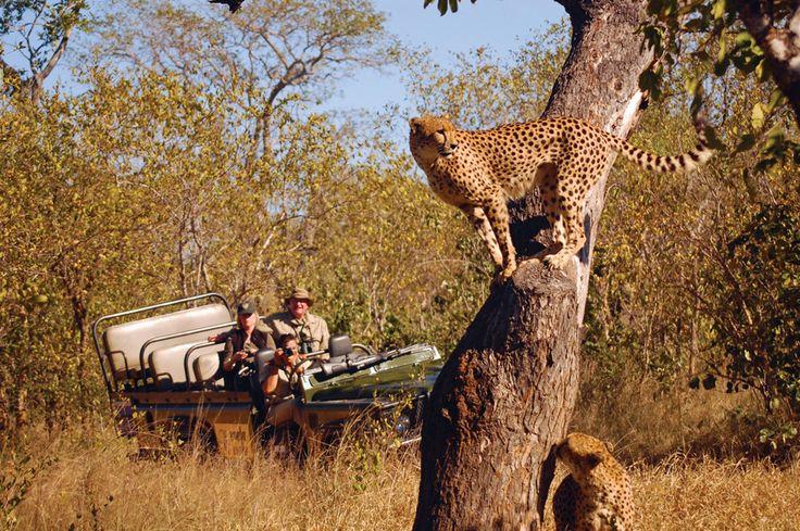 South-eastern Kruger
