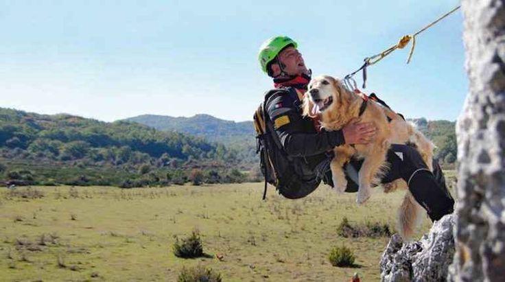 """Cani eroi, un format completamente """"made in Italy"""" Per tutti gli appassionati di animali, ed in particolare di cani, nel Sabato mattina di Rai Due sta per essere inserito un format interamente dedicato a loro, sto parlando di: """"Cani eroi""""E' un format #canieroi"""