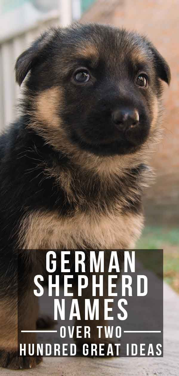 German Shepherd Names Over 200 Great Ideas For Boy And Girl Dogs