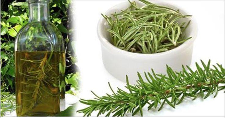 Diga adeus às varizes, celulite, dores musculares e nas articulações com este remédio de alecrim! | Cura pela Natureza