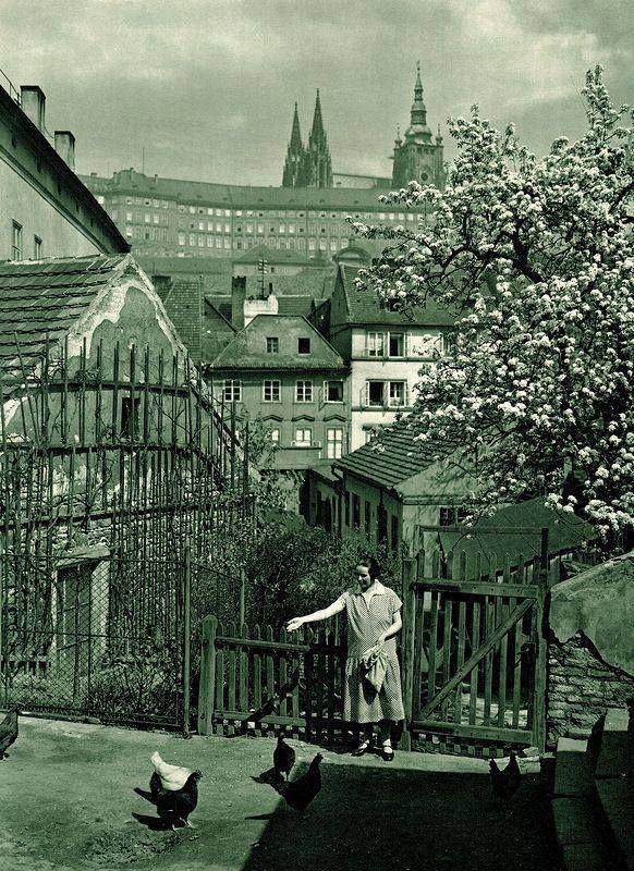 Praha -Krmení slepic ve Vlašské ulici - Foto Jan Posslet (1931)