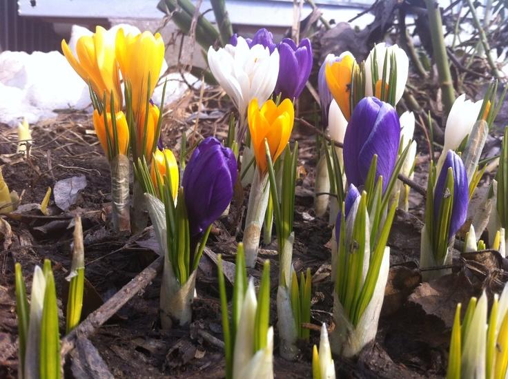 Spring  #anticafelodge  #anticafe  #Lodge