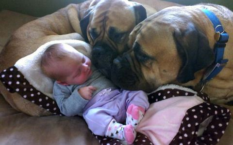 Caption This! 2 Dogs and a Baby