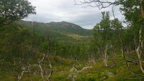 Fagerdalen Cabin Property (Telemark Camping & Inn)