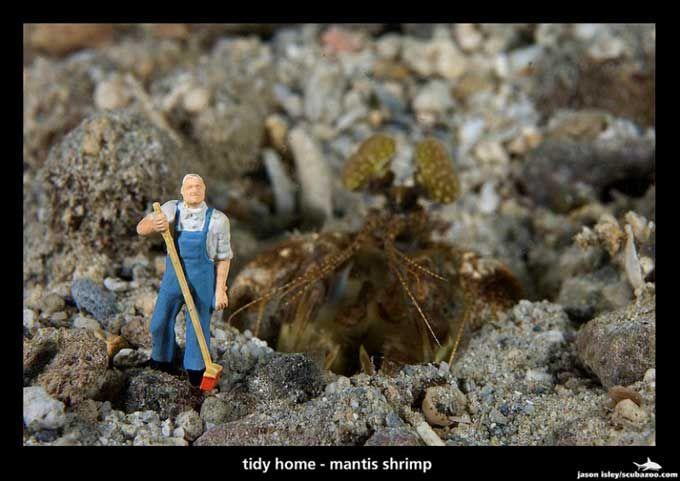 camarón mantis religiosa