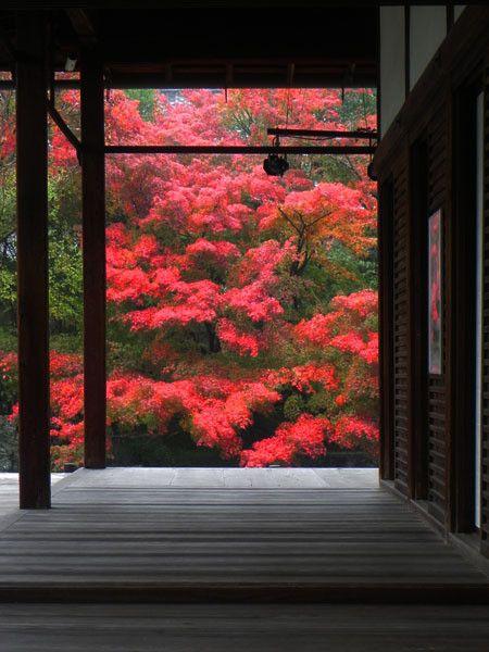 東山(2) 京都紅葉便り2011 の画像|西陣に住んでます