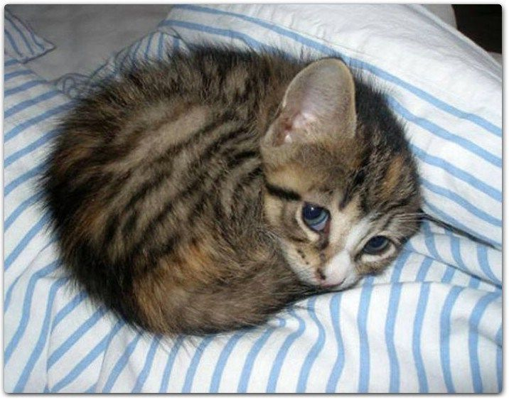 40 So Cute Kittens That Youll Want To Cuddle Them …