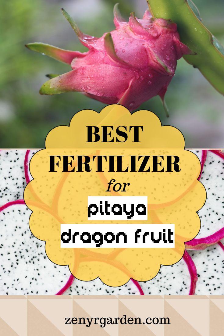Best Fertilizer For Dragon Fruit Plants Dragon Fruit Plant Dragon Fruit Garden Dragon Fruit