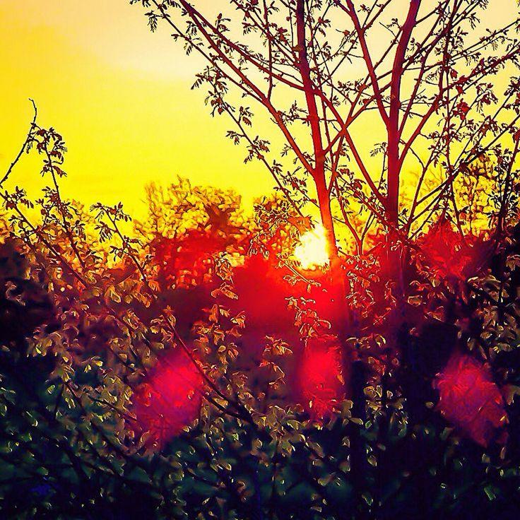 Welcome Sun #photoexpress #wonderland #whatawonderfulworld #whenthesunsgoesup #sunset #sunshine #seethebeauty #relax #thessaloniki #iphoneonly #instagreece #imagine #orange #aviary #deluxefx #feelings #feelthevibe #Greece #keepthespiritalive #colors #chill #nature #magic #mjdoddy #welcomemay #may #Hellas
