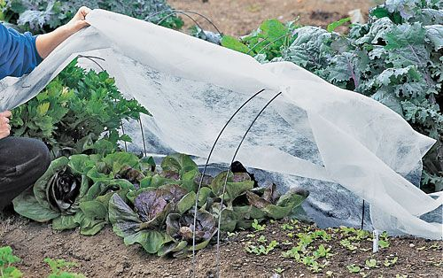 Garden Fabric Row Covers Shade Netting Frost Covers Gardens Shades And How To Use