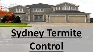 #Best #termite #treatment #sydney