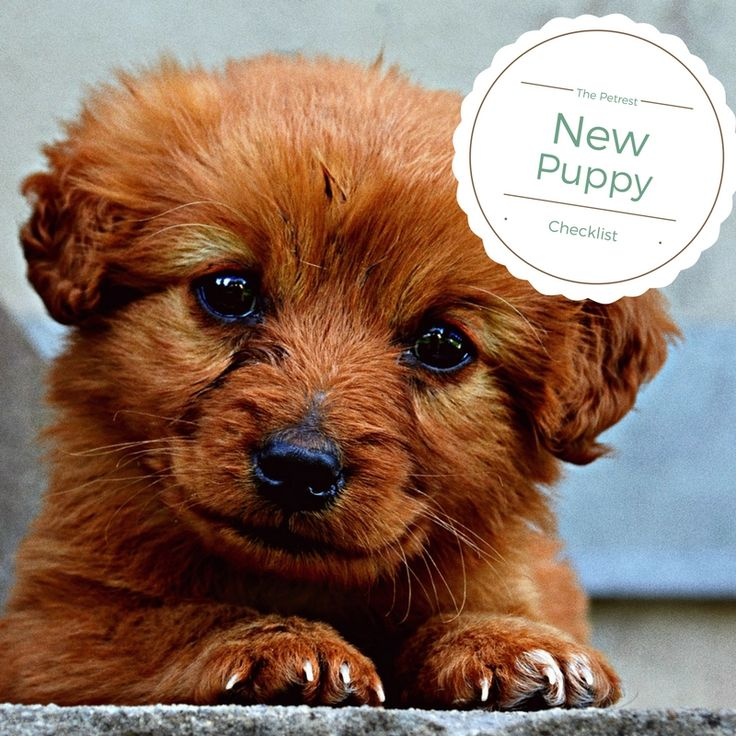 New Puppy Checklist from Petrest
