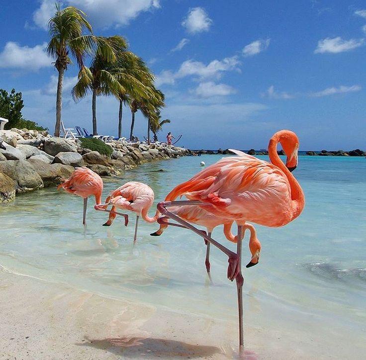 Renaissance Island FlamingoRenaissanceFlamingos 63 best Aruba Beaches