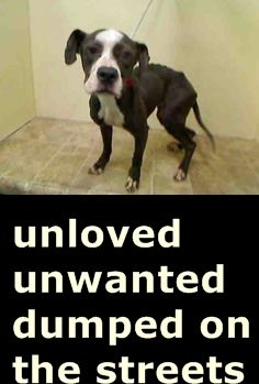 PULLED BY AMSTERDOG ANIMAL RESCUE - 06/08/15 - Manhattan Center JOONMARIE – #A1038273 FEMALE, GRAY, PIT BULL MIX, 3 yrs STRAY – STRAY WAIT, NO HOLD Reason STRAY Intake condition ILLNESS Intake Date 06/01/2015