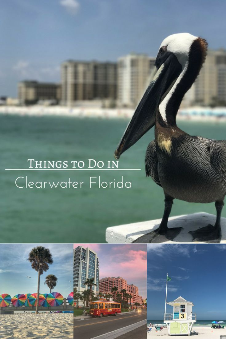 Things to Do in Clearwater Florida - Adventure Mom Looks nice! I love your photo <3 #lovetotravel #funtravel