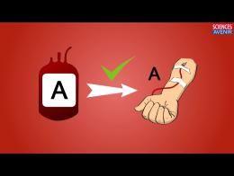 Groupe sanguin o ve