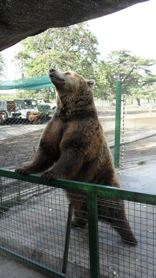 Zoo de Lujan- Argentina