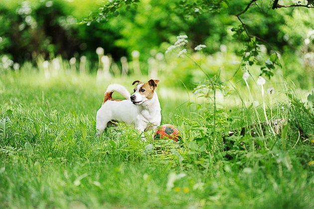 Lemmikkikuvauksen salat: koirien kuvaaminen - http://www.ifolor.fi/inspire_lemmikkikuvaus_koirat