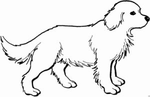 ausmalbild einfach hunde - google-suche | retriever welpen