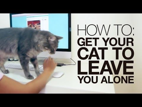 How to get your cat to leave you alone