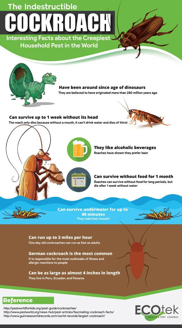 Pest control infographic about cockroaches Pest control
