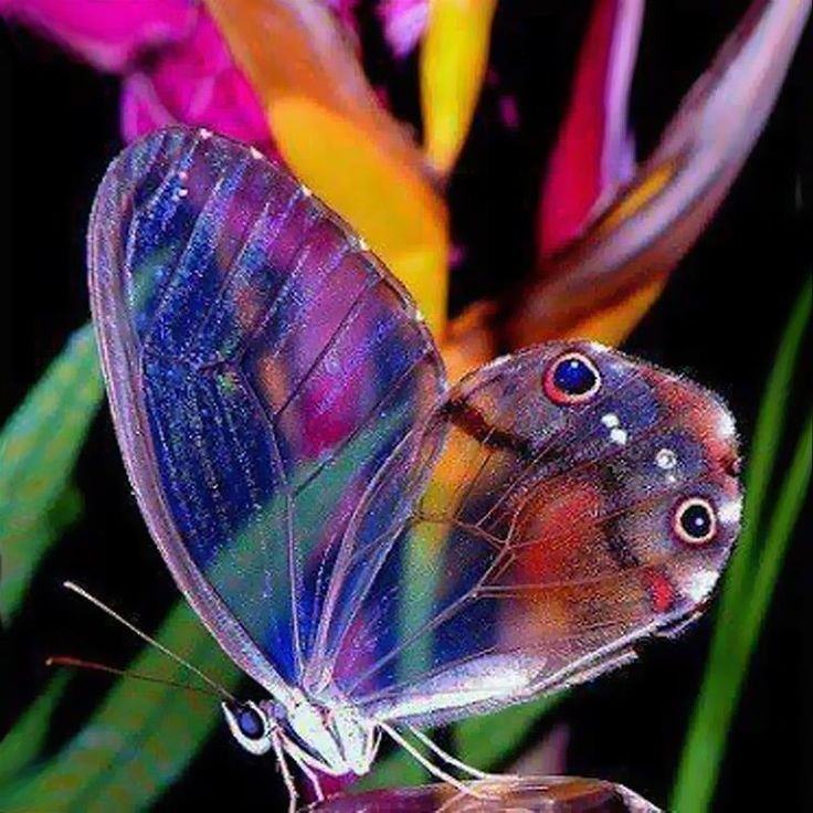 May the wings of the butterfly kiss the sunAnd find your shoulder to light on,To bring you luck, happiness and richesToday, tomorrow and beyond.~Irish Blessing