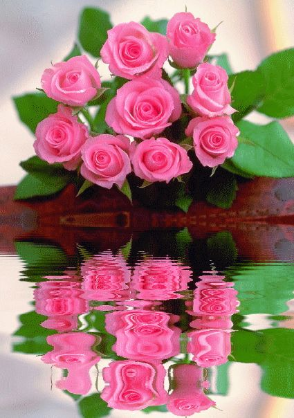 Reflections of some very lovely pink roses with green leaves...I know a lot of AKA's that would just die to have these!
