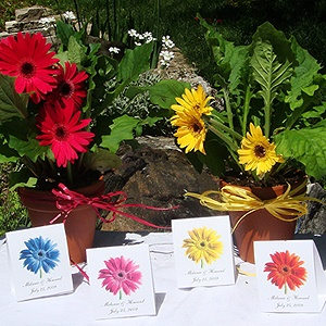 gerber daisy potted plants are eco centerpieces