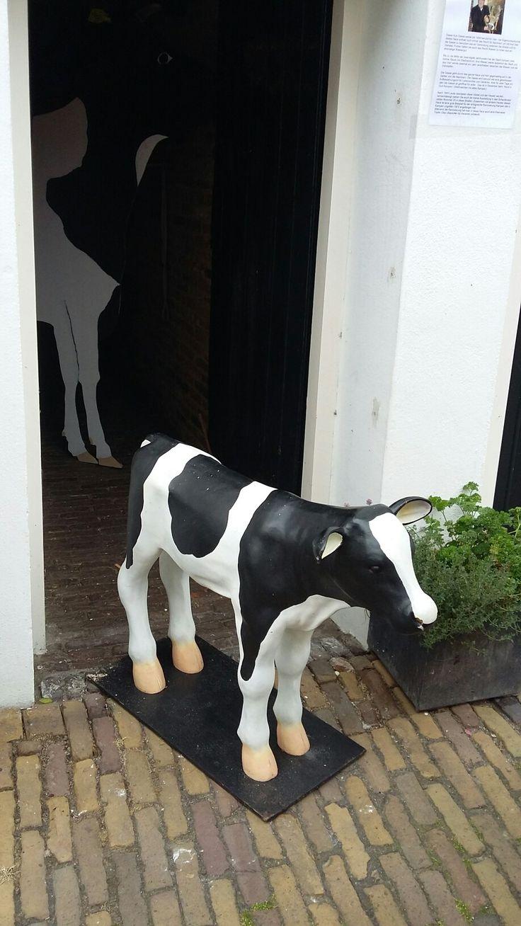 Kleine koe in Kampen