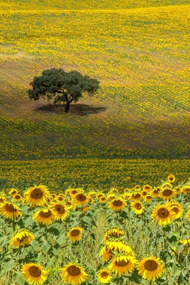 Baixo Alentejo - Portugal. Photo Luís Reininho