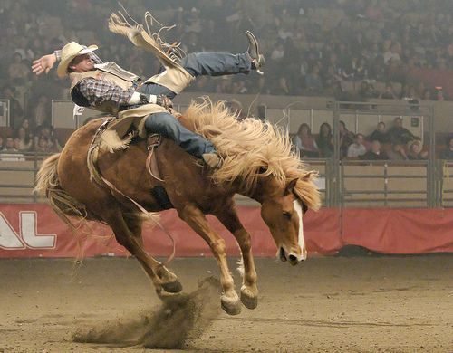 Rodeo cowgirls amateur