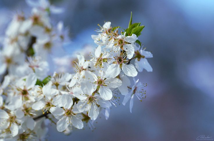 Bloom by András Pásztor on 500px