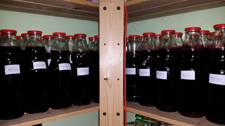 Blackcurrants and Redcurrants are extremely rich in vitamin C. They also have a wide spectrum of other vitamins and minerals. We make juice out of both red and blackcurrant berries once a year in July from 50 kgs of berries. In this recipe, I make the juice, bottle it and preserve it for use in Autumn, Winter and Spring. The juice is a concentrate and needs to be mixed with water before drinking.