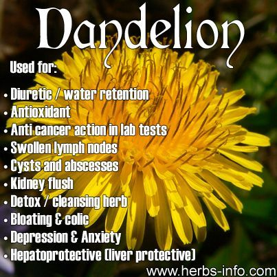 Dandelion - thought by many to be a garden weed, dandelion is edible, nutritious and has been found to have several therapeutic actions in lab tests.