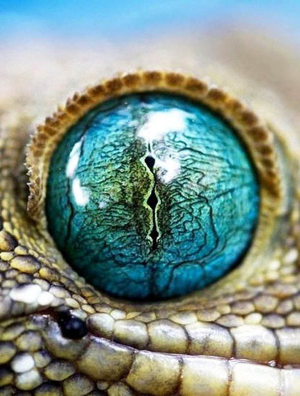 Fantastic blue green orb of a reptilian eye. Curated for your pinning pleasure by prolabdigital.com.
