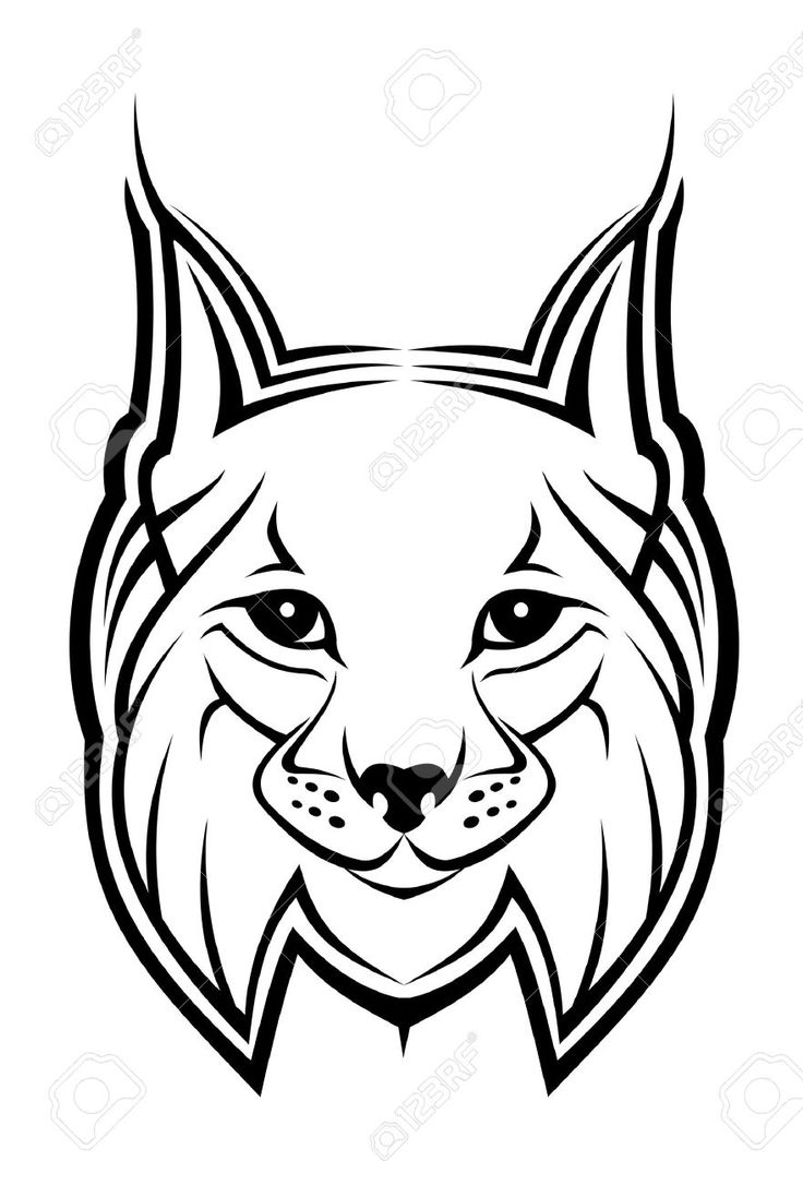best 25 black bobcat ideas on pinterest big eyed animals big