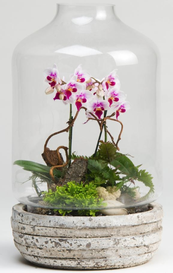 Learn to make your own Orchid terrarium  http://viid.me/9n5er