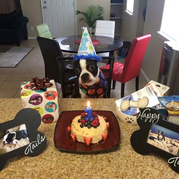 Best 25+ Dog First Birthday Ideas On Pinterest