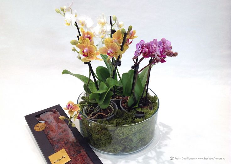 Орхидеи и шоколад.
