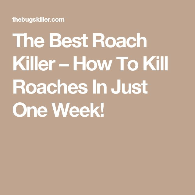 The Best Roach Killer – How To Kill Roaches In Just One Week!