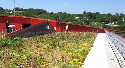 grassen op een dak - Google Search