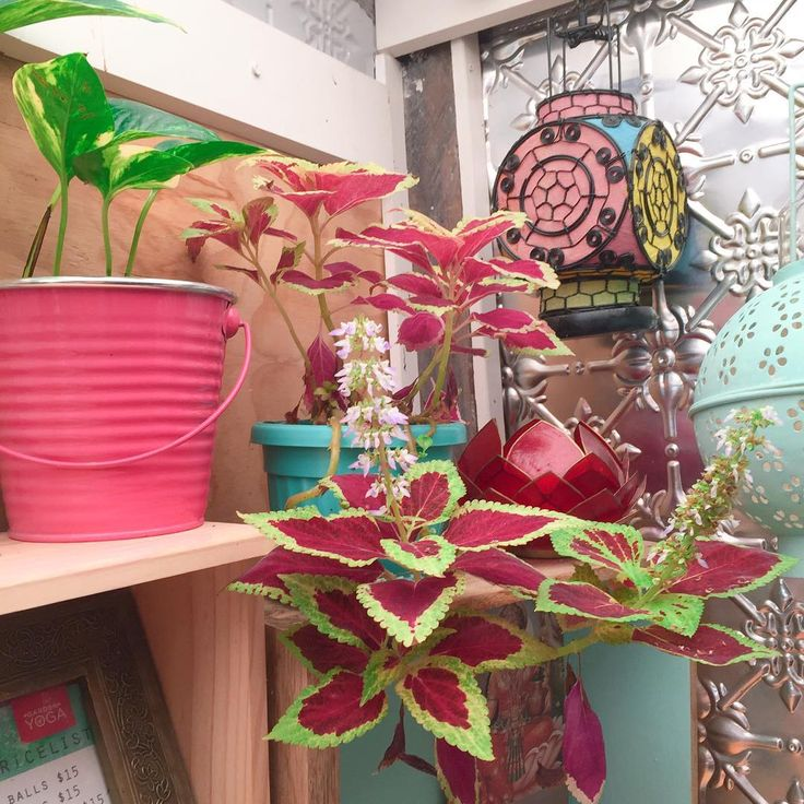 Studio plant life, when one of my indoor plants is struggling I move them to this shelf and they always perk up, they love the yogic vibes!