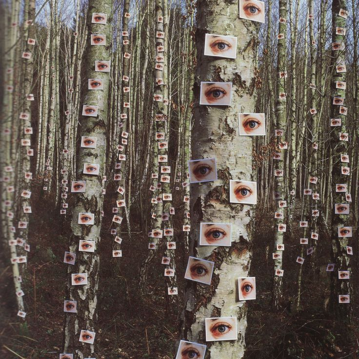 "Storm Thorgerson ""Eyes on Trees"" from the album ""Wishville"" by The Catherine Wheel"