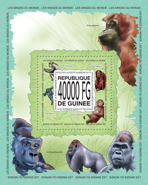 GU 13514 bMonkeys, (Pan paniscus, Pongo pygmaeus, Pan troglodytes).