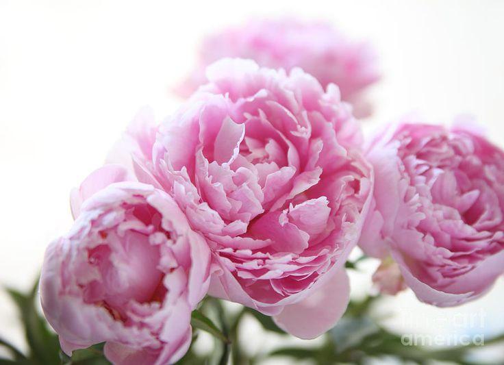 The Pink Peonies 17 bästa bilder om our london wedding på pinterest | rosa pioner