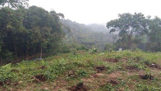 Dijual tanah kebun di bogor luas lahan 7 hektar SHM more info www.tanahkebun.com