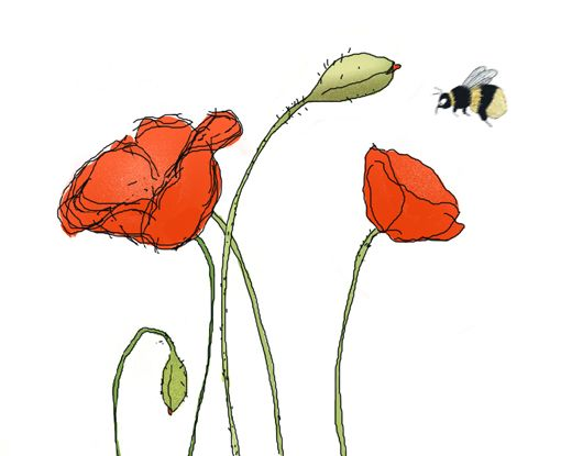 17 Best Images About Poppies On Pinterest  Watercolors Sketching And Watercolor