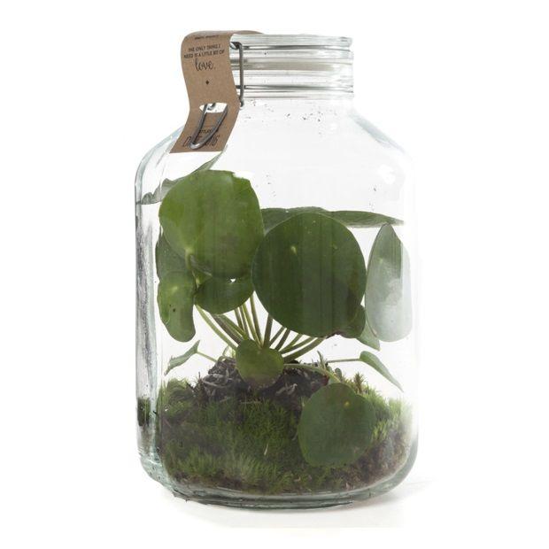 woonakamer  ||  Green Lifestyle Store Kamerplant Pilea 'Pannenkoekenplant' - In Weckpot - afbeelding 1