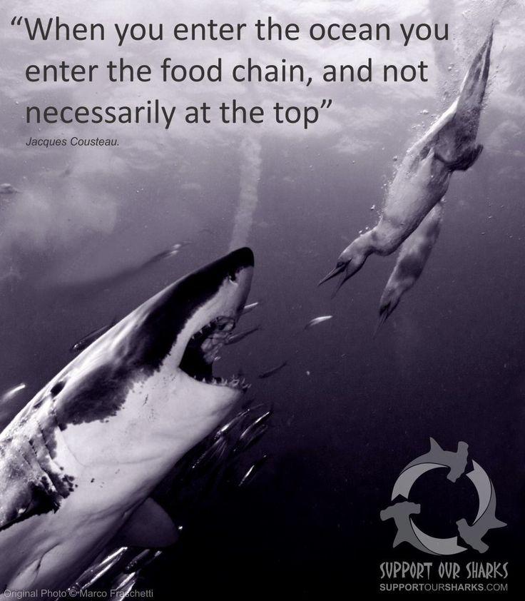 great white shark bc pdf